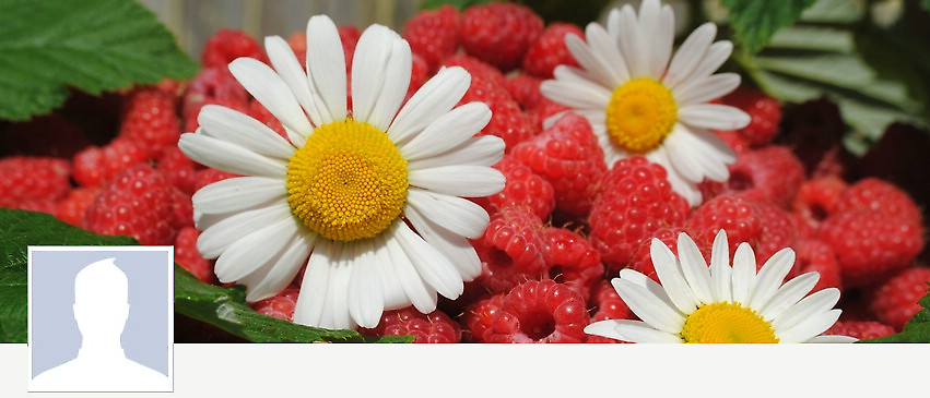 картинки на рабочий стол лето цветы № 517555 загрузить